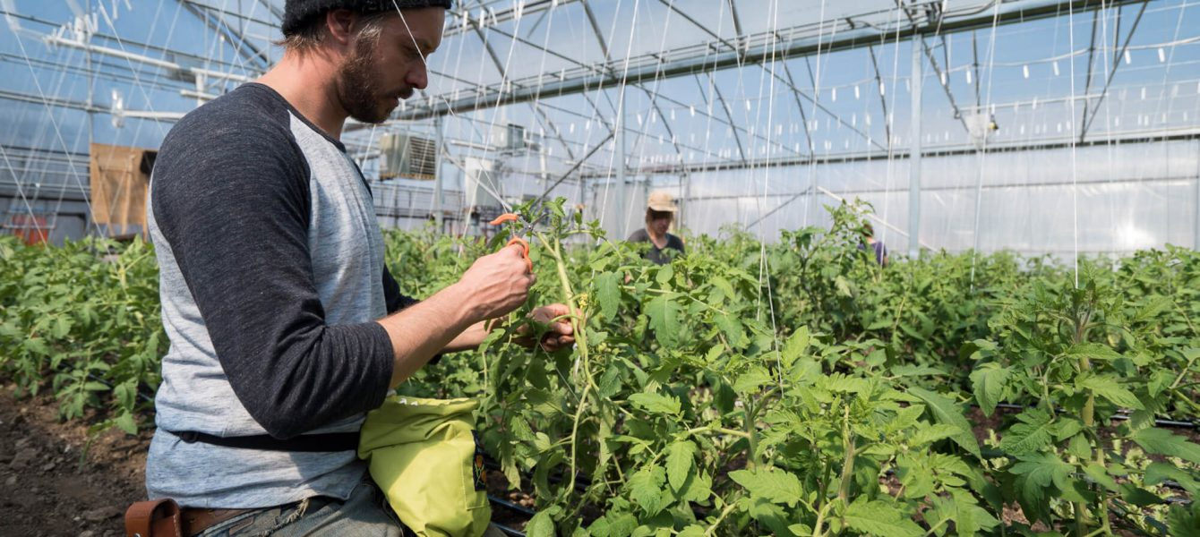 Working in a greenhouse