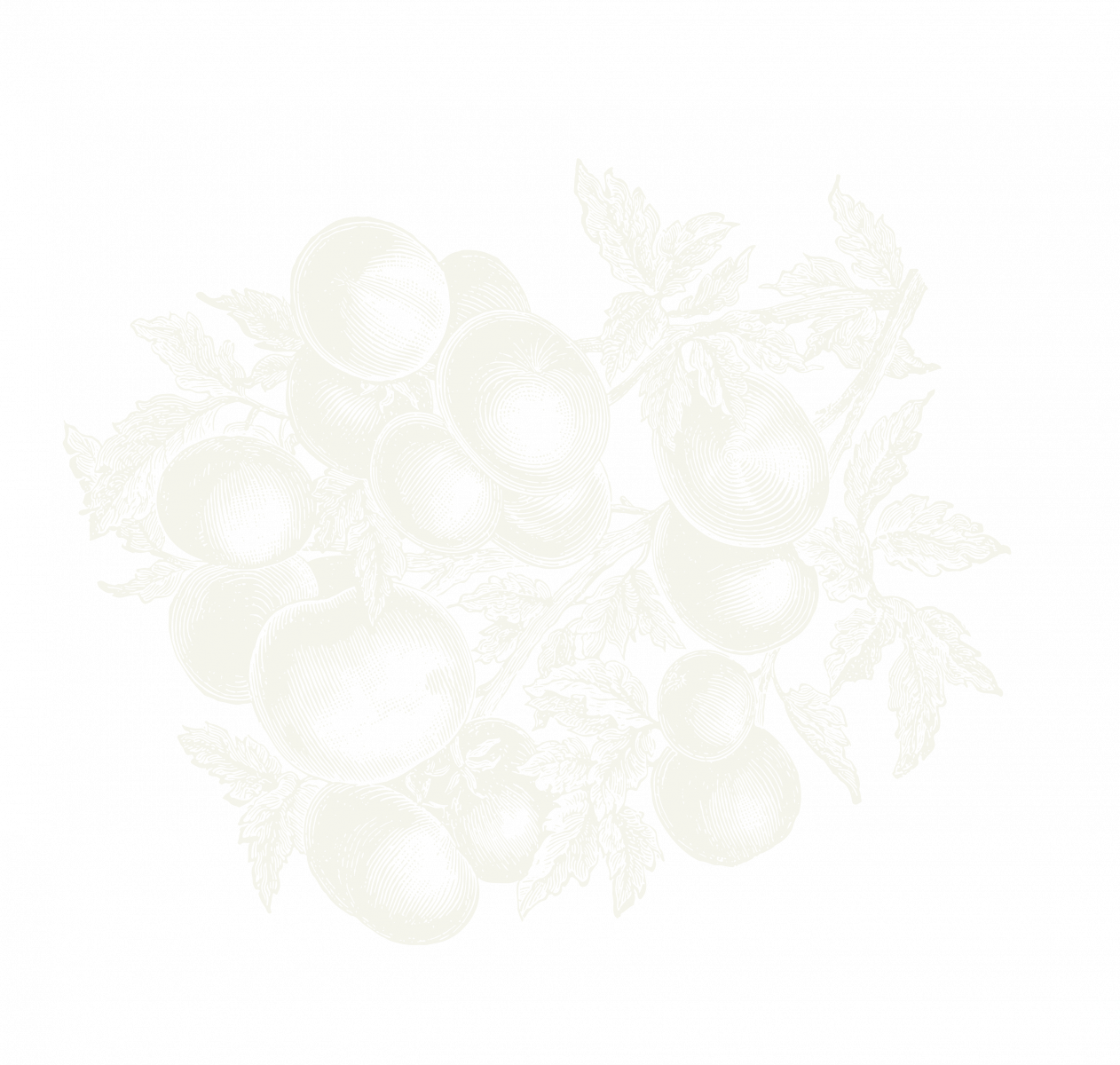 Vegetable illustration of greens