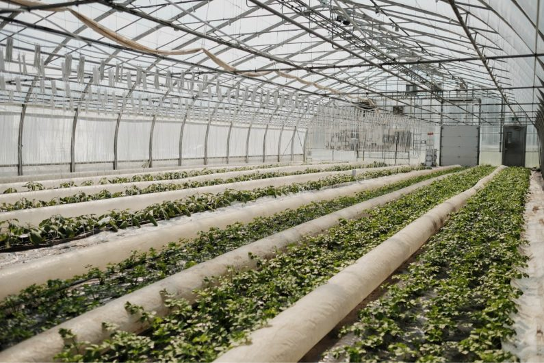 Five investments to consider to improve your game in your greenhouse production. / Credit : Alex Chabot