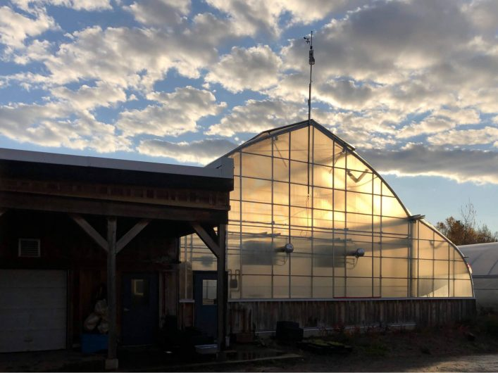 Insulation is one factor you must consider before buying a greenhouse. / Credit : Alex Chabot