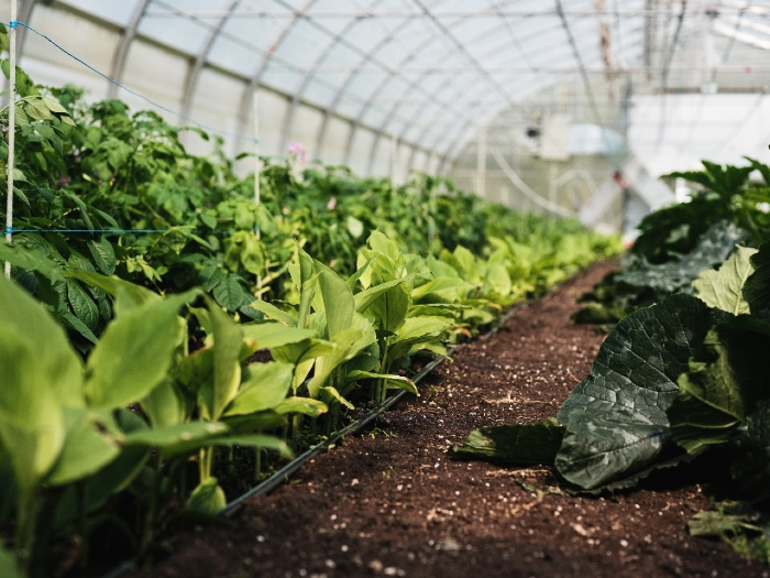 Creating the perfect climate in your greenhouse. /Credit : Alex Chabot