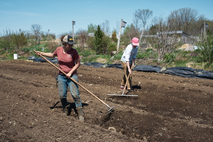 A good rake should be on the list of must-have tools for every market garden. / Credit: Alex Chabot