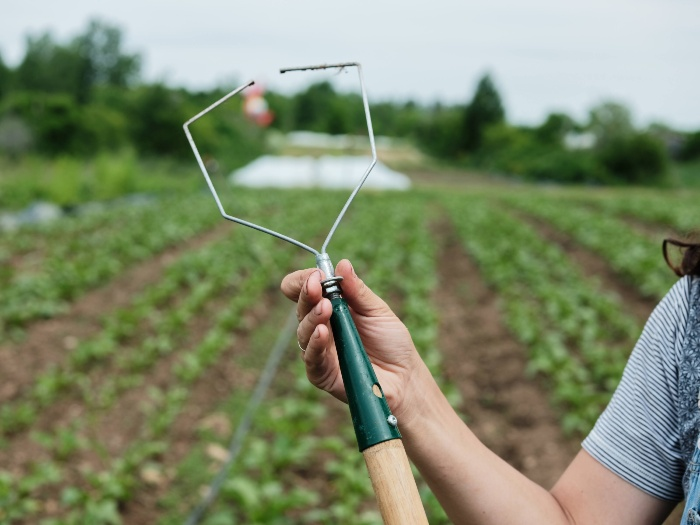 Since you can change the head of the interchangeable wire weeder, it can work with different crops. /Credit: Alex Chabot